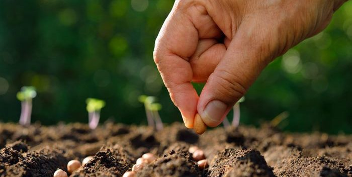 انواع خاک های باغبانی,خاک باغبانی,خاک های باغبانی